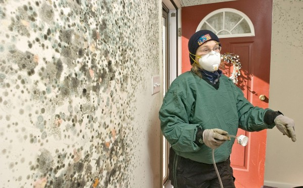 risks-of-mould