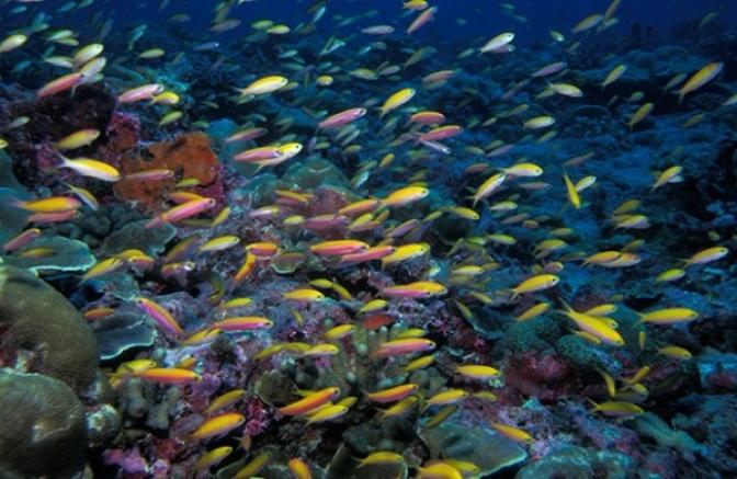 Máy ozone và ứng dụng vào nuôi cá cảnh